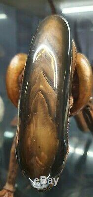 Hot Toys Dog Alien 1/6 Scale Not Warrior with 6 x Alien eggs and 2 face huggers